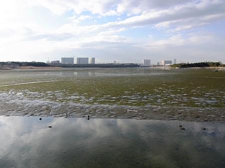20100123 谷津干潟 03