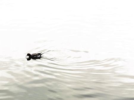 20100123 谷津干潟 水紋02