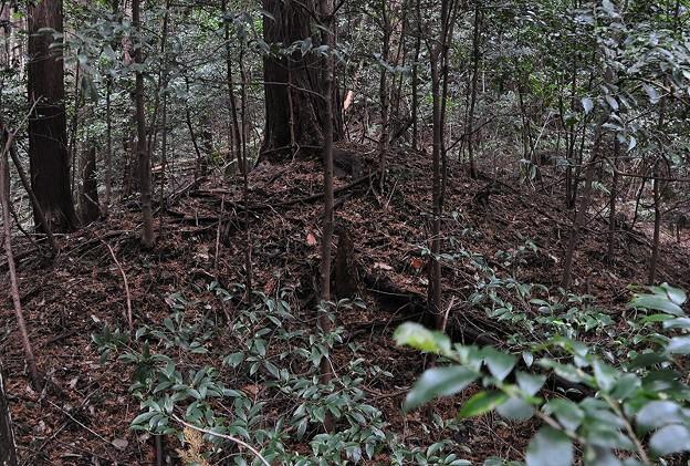 タグ:花山塚古墳の写真 - 写真...