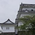 写真: DSC02457小田原城