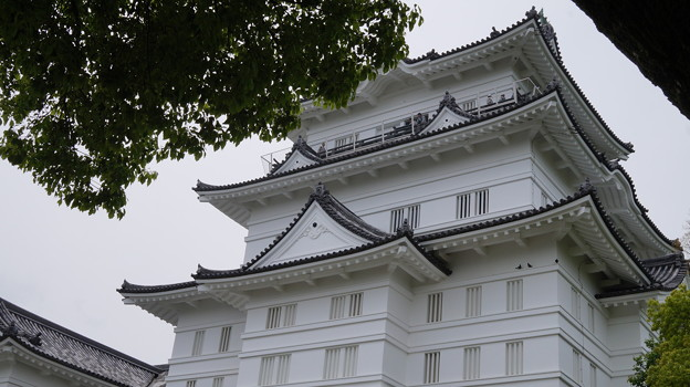 DSC02464小田原城