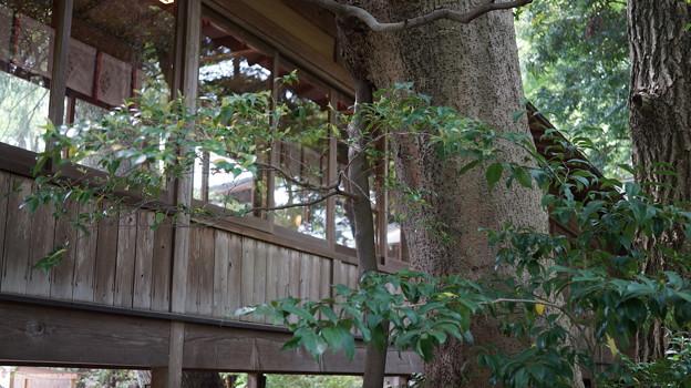 写真: DSC02479小田原城址公園