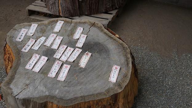 DSC02481小田原城址公園