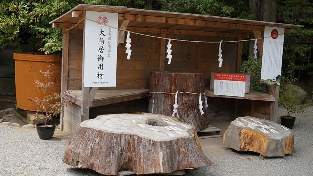 DSC02483小田原城址公園