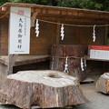 写真: DSC02483小田原城址公園