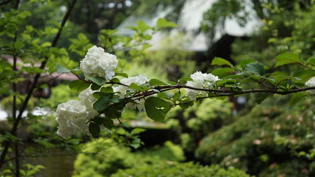 DSC02489報徳二宮神社