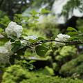 写真: DSC02489報徳二宮神社