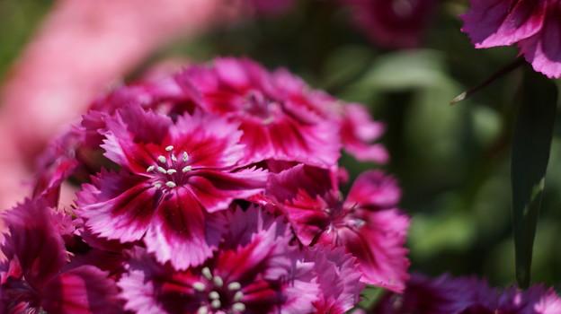 写真: DSC02630新子安公園の花5月