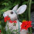 写真: 玄関先の小花