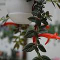 DSC03177掛川花鳥園
