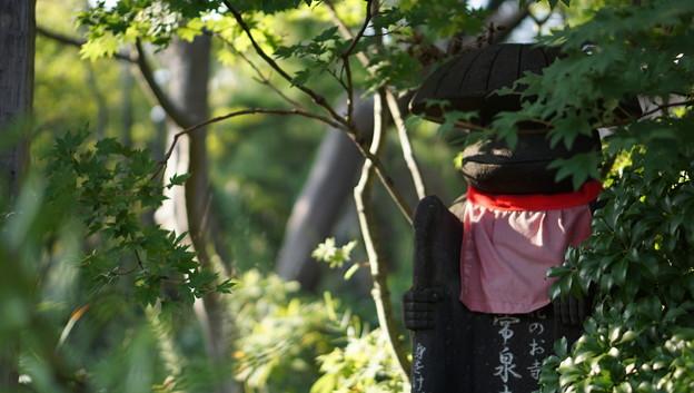 常泉寺(花寺・大和)29