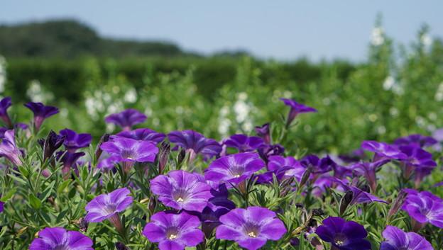 国営武蔵丘陵森林公園9
