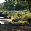 Photos: 石神井公園