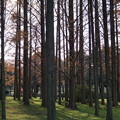 DSC05914水元公園