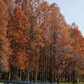 DSC05916水元公園