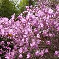 写真: 花たち
