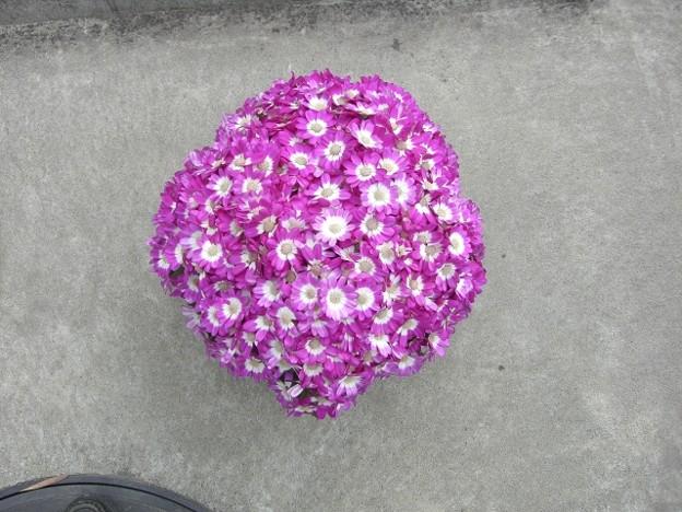 丸くなった花