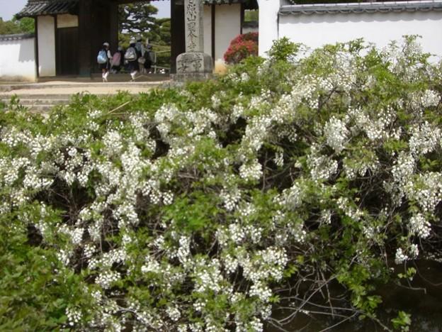 写真: 公園の花壇