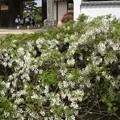 公園の花壇