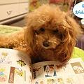 Photos: ピースと・・・2