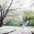 Photos: 櫻花樹下的旋舞