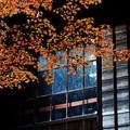 Photos: 庭先の紅葉