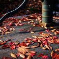 写真: 秋の井戸端会議