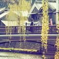 Photos: 川、橋、柳