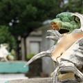 写真: 2272 大神島のシーサー@宮古島