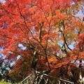 Photos: 2362 西山の善峰寺@京都