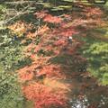 写真: 2386 神苑の逆さもみじ@京都