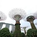 写真: 2402 昼の植物園とMarina Bay Sands@シンガポール
