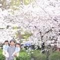 写真: 桜の季節。