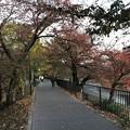 2017117 川沿いの紅葉