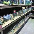 Photos: 20091212 ペットショップP&LUXE熱帯魚