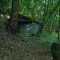 Photos: 森の生活