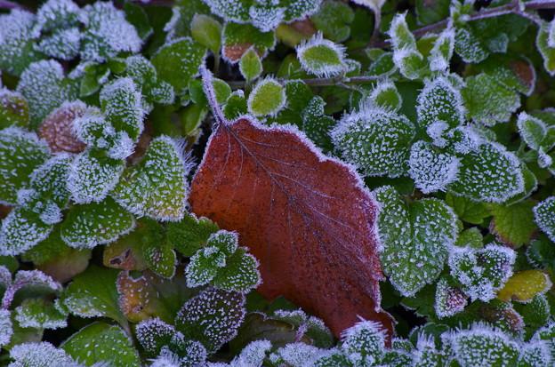 初冬の候 2