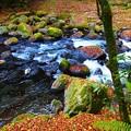 写真: 菊池渓谷(1)