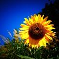 写真: パーッと咲いて