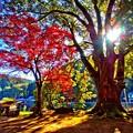写真: 神木と紅葉