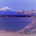 写真: 湖畔に咲く