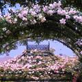 写真: バラのアーチ ~ようこそバラ園へ♪