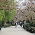 写真: 春意盎然上野公園
