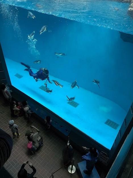 20141129 長崎ペンギン水族館06