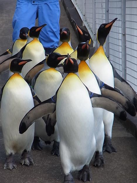 20141129 長崎ペンギン水族館10
