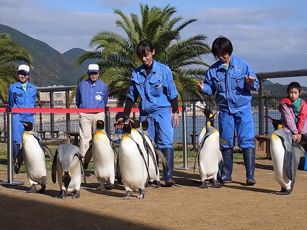 20141129 長崎ペンギン水族館11