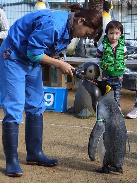 20141129 長崎ペンギン水族館12