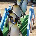 20141129 長崎ペンギン水族館14