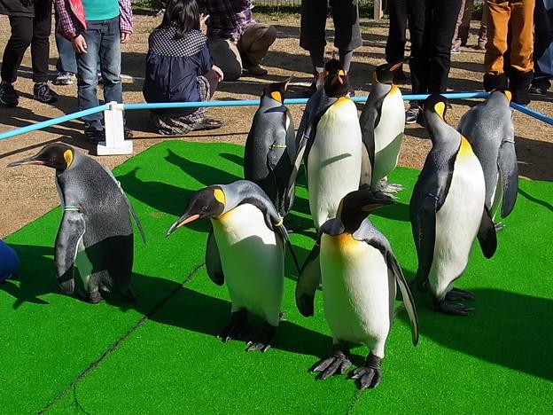 20141129 長崎ペンギン水族館15