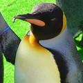 20141129 長崎ペンギン水族館16
